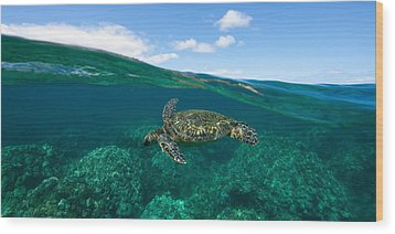West Maui Green Sea Turtle Wood Print