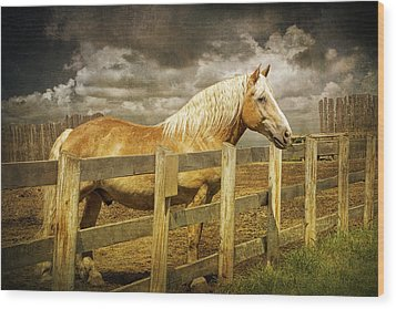Western Horse In Alberta Canada Wood Print by Randall Nyhof