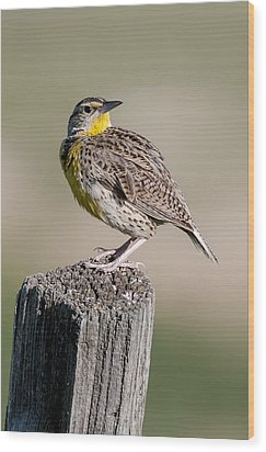 Wood Print featuring the photograph Western Meadowlark by Gary Lengyel