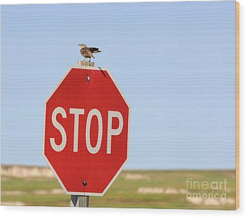 Western Meadowlark Singing On Top Of A Stop Sign Wood Print by Louise Heusinkveld