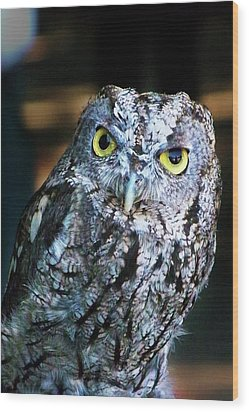 Wood Print featuring the photograph Western Screech Owl by Anthony Jones