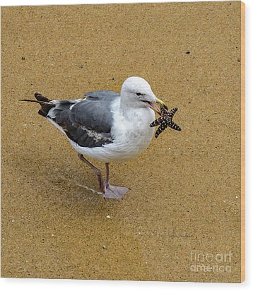 Western Seagull Carrying A Starfish Wood Print