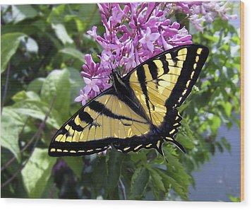 Western Tiger Swallowtail Butterfly Wood Print by Daniel Hagerman