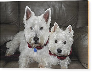 Westie World Wood Print