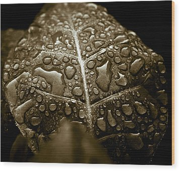 Wet Havana Tobacco Leaf Wood Print by Frank Tschakert