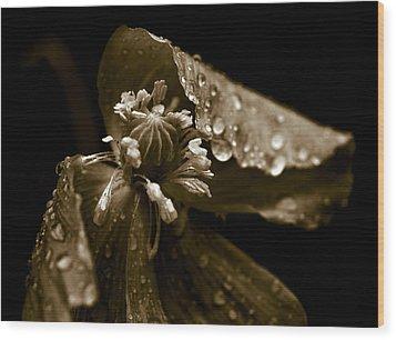 Wet Opium Poppy Wood Print by Frank Tschakert