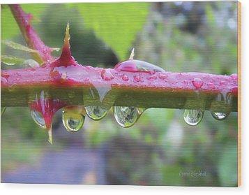 Wet Prick Wood Print by Donna Blackhall