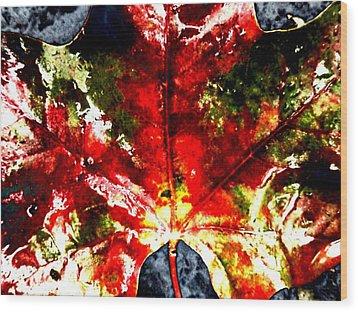 Wet Single Leaf Wood Print by Beth Akerman