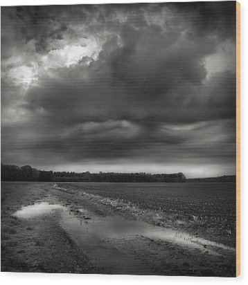 Wet Spring Wood Print by Jaromir Hron
