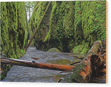 Wood Print featuring the photograph Wet Trail by Jonathan Davison