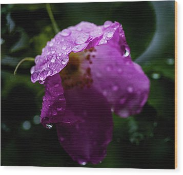 Wood Print featuring the photograph Wet Wild Rose by Darcy Michaelchuk