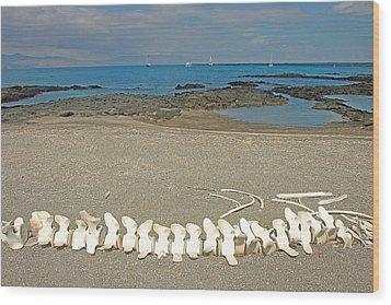 Whale Bones Wood Print by Alan Lenk