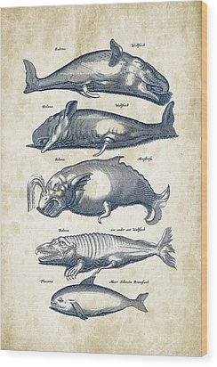 Whale Historiae Naturalis 08 - 1657 - 41 Wood Print by Aged Pixel
