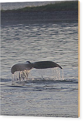 Whale In Alaska Wood Print by Don Wolf