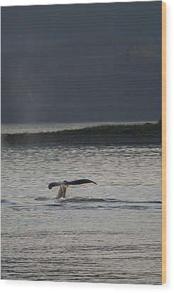 Whale In Alaskan Waters Wood Print by Don Wolf