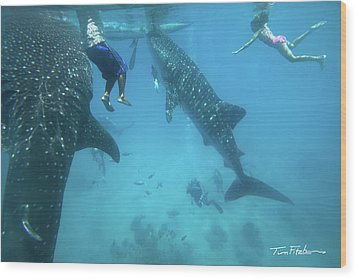 Whale Sharks Wood Print by Tim Fitzharris