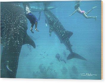 Whale Sharks Wood Print