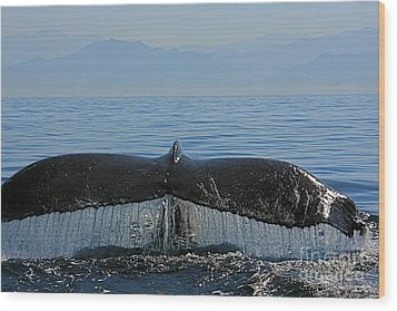 Whale Tail 4 Wood Print by Nicola Fiscarelli