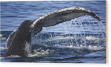 Whale Tail Wood Print by Dapixara Art