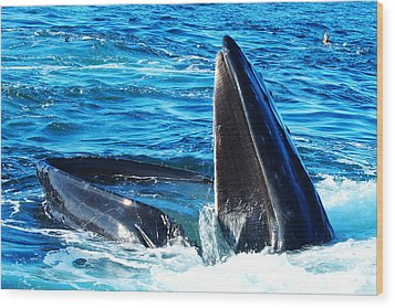 Whale's Opening Mouth Wood Print by Paul Ge