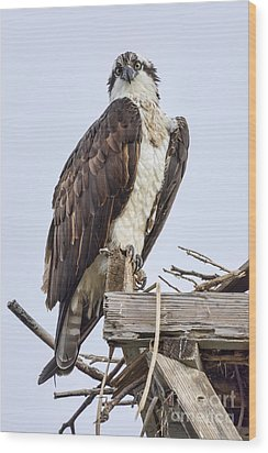 What Are You Looking At Wood Print by Eddie Yerkish
