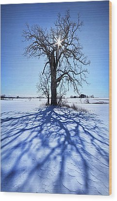 Wood Print featuring the photograph What I Am, What I Was, What I Will Be by Phil Koch