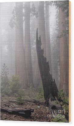 Wood Print featuring the photograph What Lurks In The Forest by Peggy Hughes
