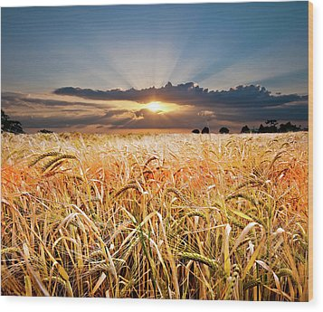 Wheat At Sunset Wood Print by Meirion Matthias