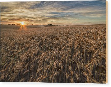 Wheat At Sunset Wood Print