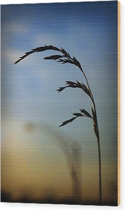 Wheat In Silhouette Wood Print by Dave Chafin