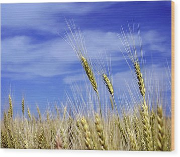 Wheat Trio Wood Print by Keith Armstrong