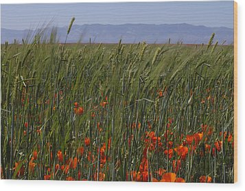 Wood Print featuring the photograph Wheat With Poppy  by Ivete Basso Photography