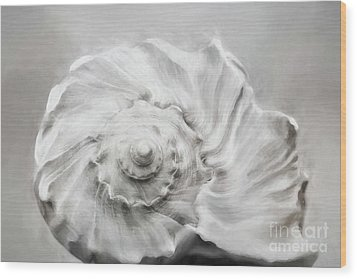 Wood Print featuring the photograph Whelk In Black And White by Benanne Stiens