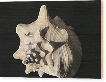 Whelk Wood Print by Mary Haber