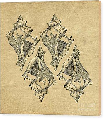 Wood Print featuring the digital art Whelk Seashells Vintage by Edward Fielding