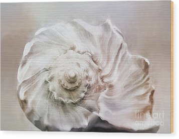 Wood Print featuring the photograph Whelk Shell by Benanne Stiens