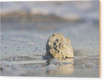 Whelk Shell In Surf Wood Print by Bob Decker