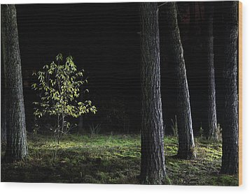 Wood Print featuring the photograph When First Leaves Start To Fall - Autumn by Dirk Ercken