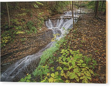 Wood Print featuring the photograph When The Leaves Fall by Dale Kincaid
