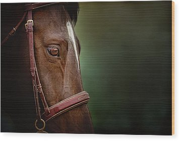 When You Look Into His Eye, What Do You See? Wood Print by Debby Herold