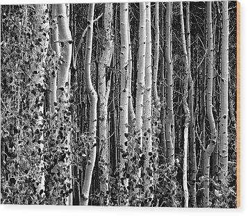 Where Wood Print by David Gilbert