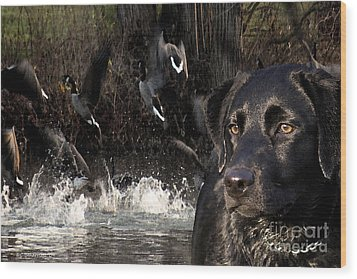 Where's The Geese Labrador 6 Wood Print by Cathy  Beharriell