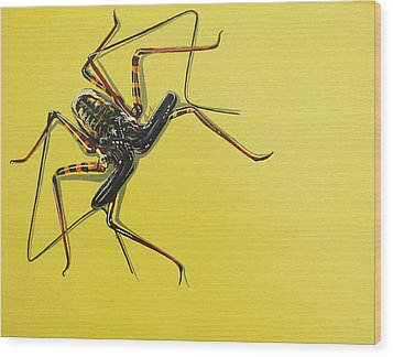 Whip Scorpion Wood Print