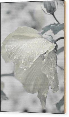 Whisper In Pearlwhite Wood Print by Rose  Hill