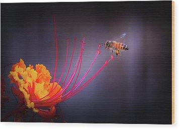 Whispering Wings 1 Wood Print by Mark Dunton