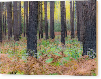Whispering Woods Wood Print by Mary Amerman