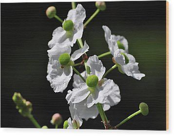 White And Green Wildflowers Wood Print