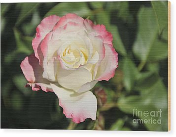 White And Red Rose 3 Wood Print by Rudolf Strutz