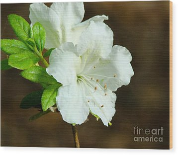 White Azalea  Wood Print by Rand Herron
