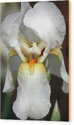 Wood Print featuring the photograph White Bearded Iris 2 by Sheila Brown